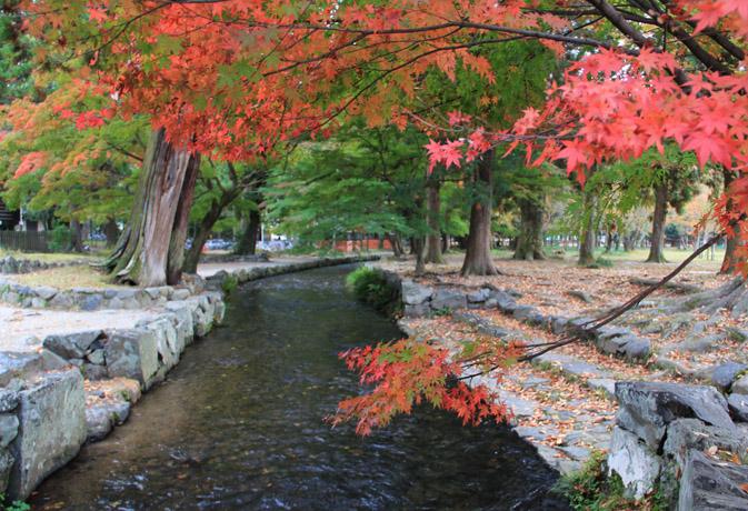 2012 上賀茂神社 御手洗川 : 京...